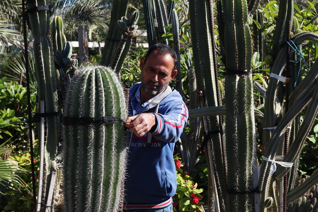 المزارع هشام بدر قضى 22 عاما من عمره في زراعة الصبار